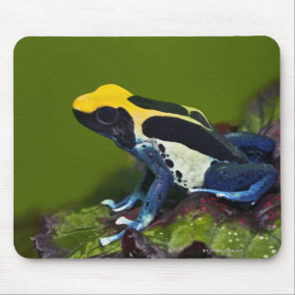 Brazilian Cobalt Dart Frog, Dendrobates Mousepad