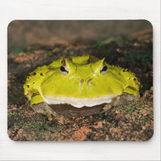 Brazilian Horn Frog, Ceratophrys cornuta, 2 Mouse Pad