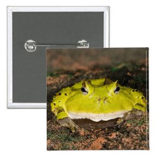 Brazilian Horn Frog, Ceratophrys cornuta, 2 Pinback Button