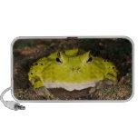 Brazilian Horn Frog, Ceratophrys cornuta, 2 iPod Speaker