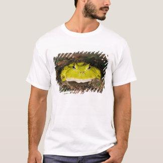 Brazilian Horn Frog, Ceratophrys cornuta, 2 T-Shirt