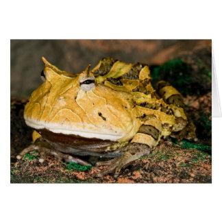 Brazilian Horn Frog, Ceratophrys cornuta, 3 Card