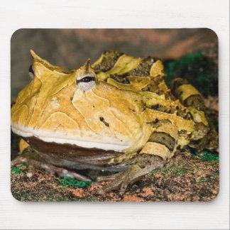 Brazilian Horn Frog, Ceratophrys cornuta, 3 Mouse Pad