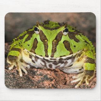 Brazilian Horn Frog, Ceratophrys cornuta, Mouse Pad