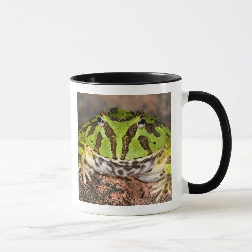 Brazilian Horn Frog, Ceratophrys cornuta, Mug
