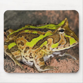 Brazilian Horn Frog, Ceratophrys cornuta, Native Mouse Pad