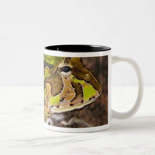 Brazilian Horn Frog, Ceratophrys cornuta, Native Coffee Mugs