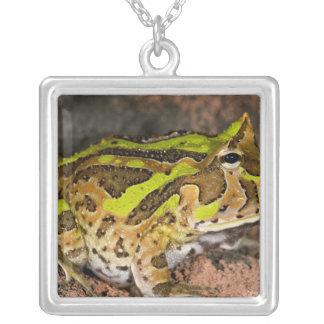 Brazilian Horn Frog, Ceratophrys cornuta, Native Square Pendant Necklace