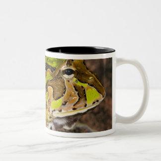 Brazilian Horn Frog, Ceratophrys cornuta, Native Two-Tone Coffee Mug