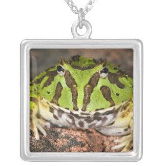 Brazilian Horn Frog, Ceratophrys cornuta, Silver Plated Necklace