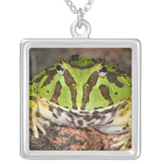 Brazilian Horn Frog, Ceratophrys cornuta, Square Pendant Necklace