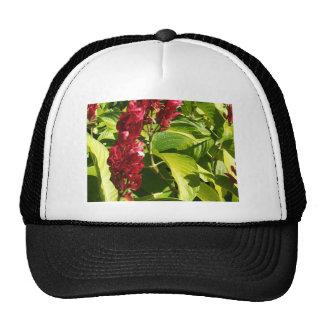 Brazilian Red Cloak Mesh Hat