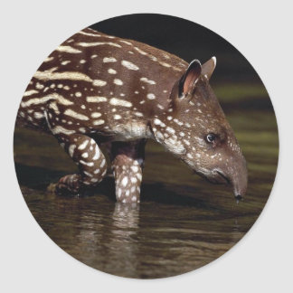 Brazilian Tapir, young calf beside river Classic Round Sticker