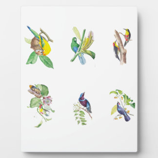 Brazilian Tropical Birds Plaque