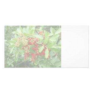 Brazillian Pepper Washed Out Pictuure Picture Card