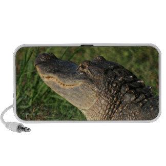 Brazos Bend Alligator Speaker