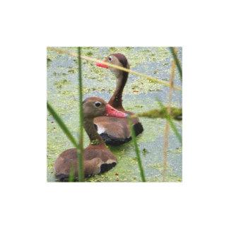 Brazos Bend Ducks Print