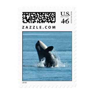 Breaching Baby Orca Stamps