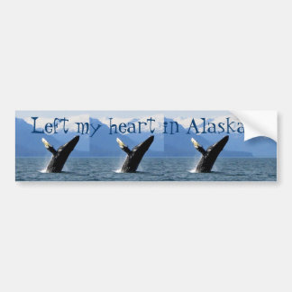 Breaching Humpback; Alaska Souvenir Bumper Stickers
