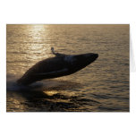 Breaching Humpback Stationery Note Card
