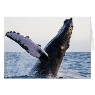 Breaching Humpback Whale #1, Blank Inside Card