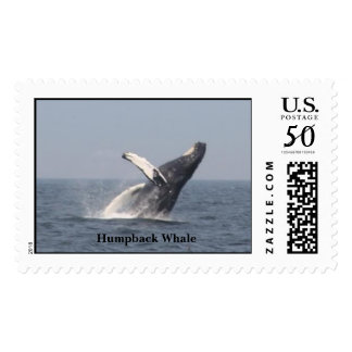 Breaching Humpback Whale Postage
