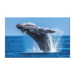 Breaching Humpback Whale Wrapped Canvas Print