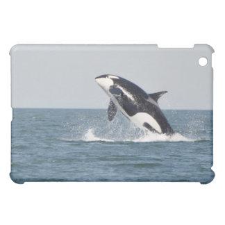 Breaching Killer Whale iPad Case