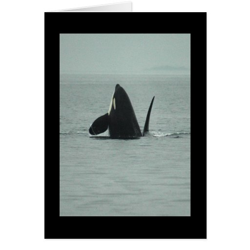 Breaching Orca Greeting Card