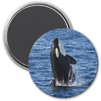 Breaching Orca (Killer Whale) Magnet