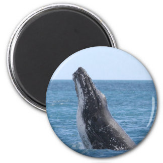 Breaching Whale 2 Inch Round Magnet
