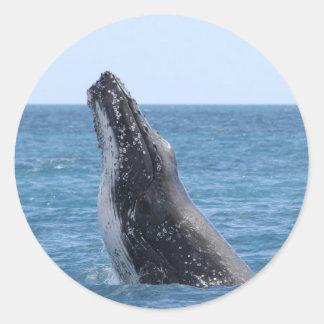 Breaching Whale Classic Round Sticker