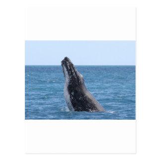 Breaching Whale Postcard