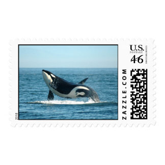 Breaching Whale Stamps