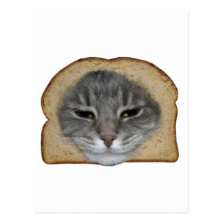 Breaded Cat Post Card