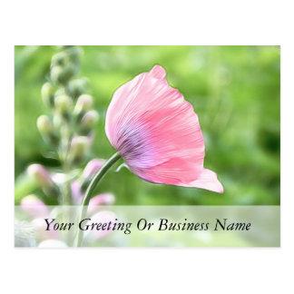 Breadseed Poppy Petals Postcard