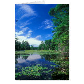 Breakneck Pond Bigelow Hollow Nipmuck State Forest Card