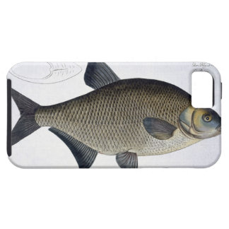 Bream (Cyprinus Brama) plate XIII from 'Ichthyolog iPhone SE/5/5s Case