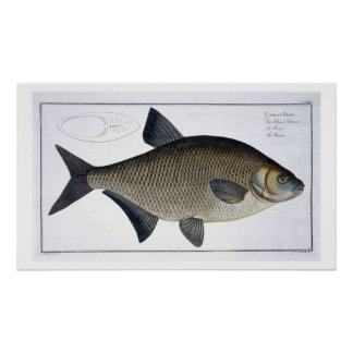 Bream (Cyprinus Brama) plate XIII from 'Ichthyolog Poster
