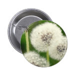 Breath flower 2013 1 pinback buttons