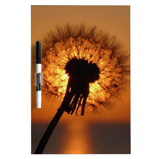 Breath flower before the going down sun Dry-Erase whiteboard