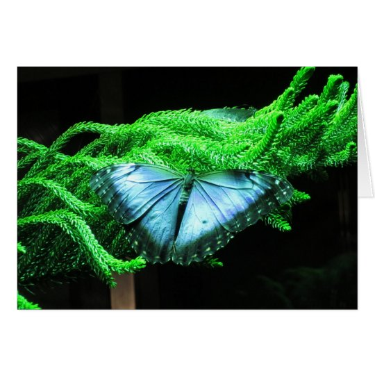 Breath Taking Iridescent Blue Butterfly Card