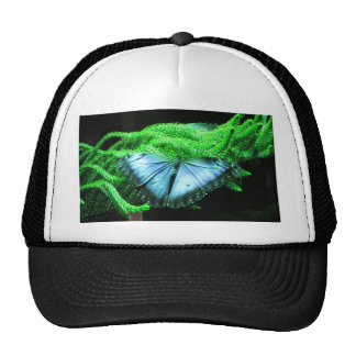 Breath Taking Iridescent Blue Butterfly Cap
