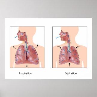 Breathing: inspiration expiration Poster