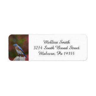 Breathtaking Eastern Bluebird Label