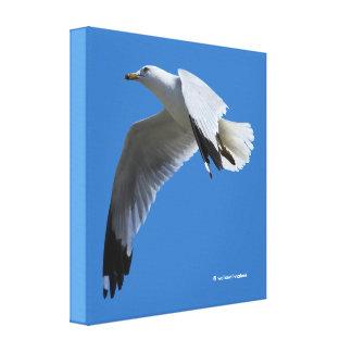 Breathtaking Ring-Billed Gull in Flight Canvas Print
