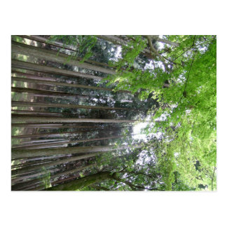 breathtaking view kyoto forest post cards