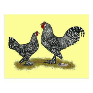 Breda Chickens Cuckoo Postcard