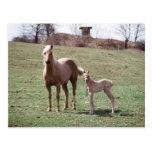 Bree & Jac Postcard