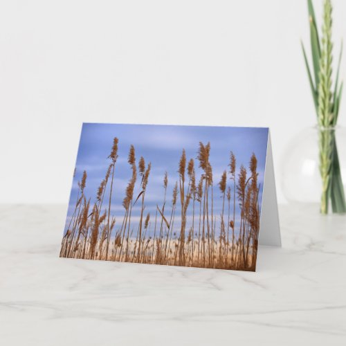 Breeze Card card